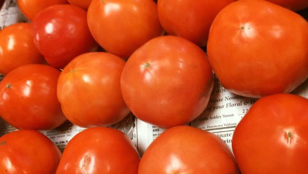 Tomatoes from Carter and Sons Produce in Valdosta, Georgia
