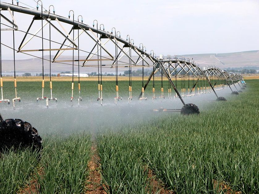 River Point Farms uses an irrigation technique called center pivot irrigation to reduce water consumption.