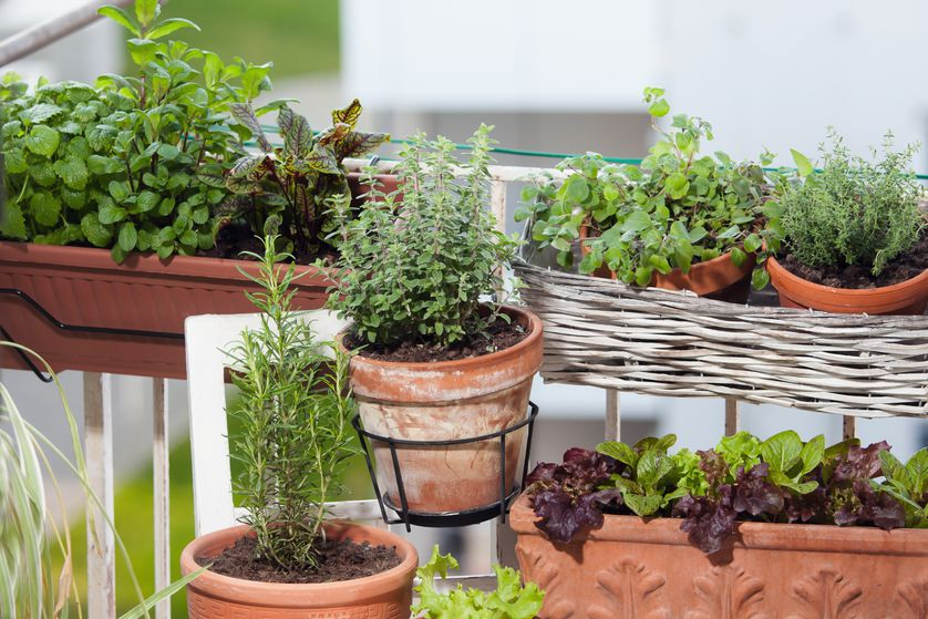 No matter how small your space, a few potted herbs can make a world of difference.