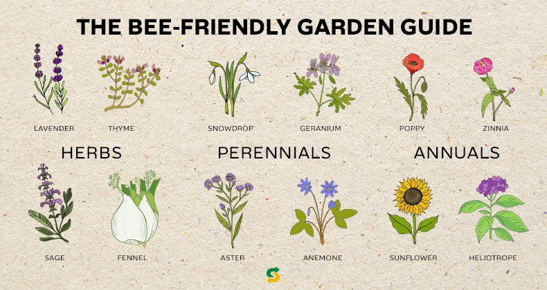The Bee-Friendly Garden Guide