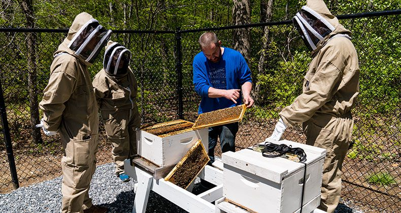 Beekeeper Ben Hurd shows employees how to perform a healthy-hive check.
